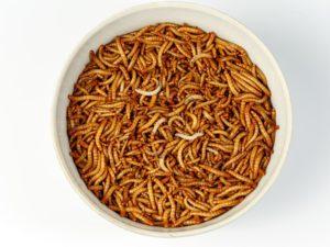 Мучной червь живой