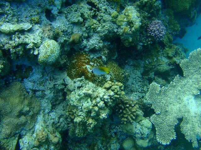 Коралловые рифы, Окинава