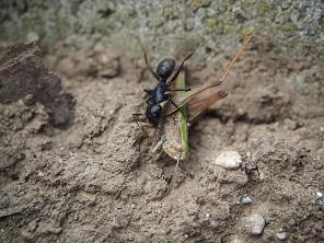 Корм для муравьев