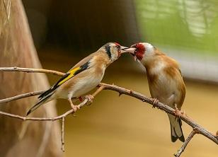 Корм для насекомоядных птиц