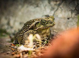Корм для жаб