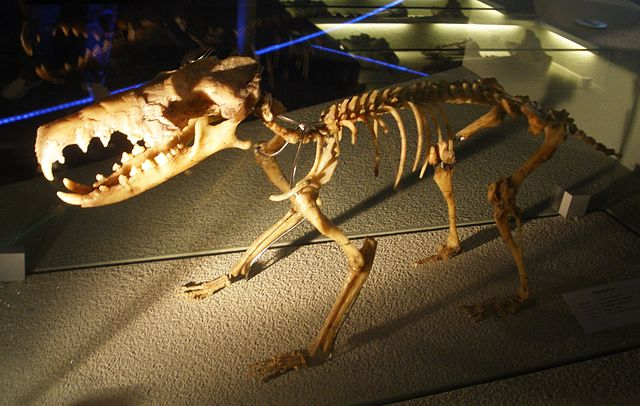 Скелет Deinogalerix koenigswaldi