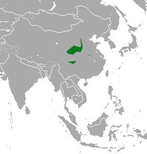 Ареал китайского ежа