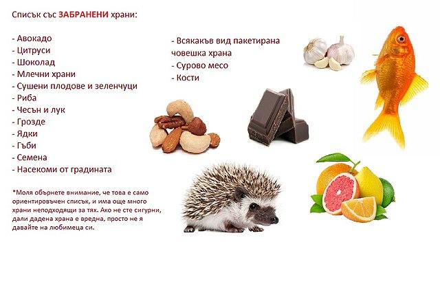 опасные для ежа продукты