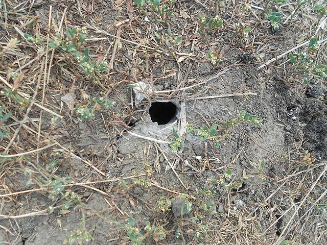 Вход в нору тарантула