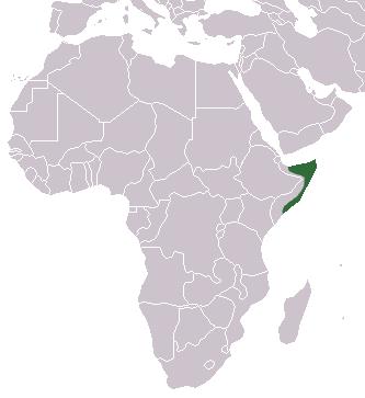Ареал сомалийского ежа